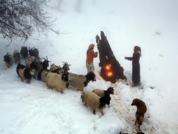 塔利什山冬季生活10