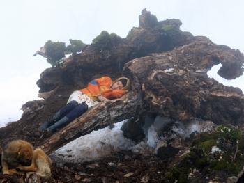 塔利什山冬季生活11