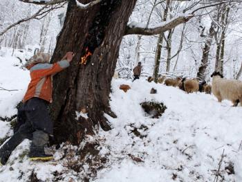 塔利什山冬季生活03