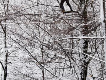塔利什山冬季生活05
