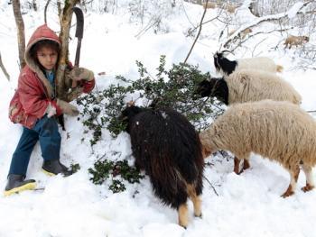 塔利什山冬季生活07