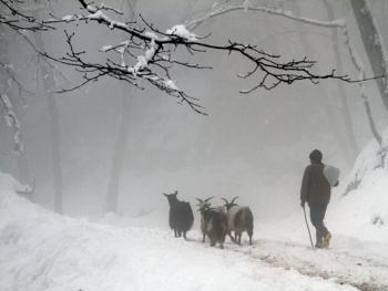 塔利什山冬季生活08