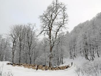 塔利什山冬季生活09