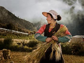收青稞的藏族女人们2