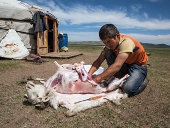 蒙古年轻牧民的生活10