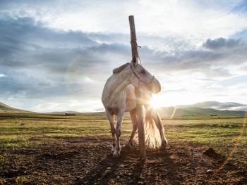 蒙古年轻牧民的生活14