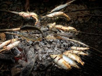 侗族田间烧鱼5