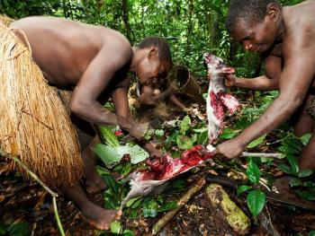 中非森林中的巴亚卡人06