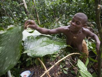 中非森林中的巴亚卡人08