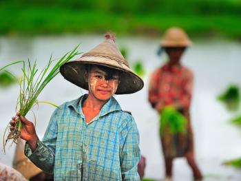 缅甸清凉涂面塔纳卡07