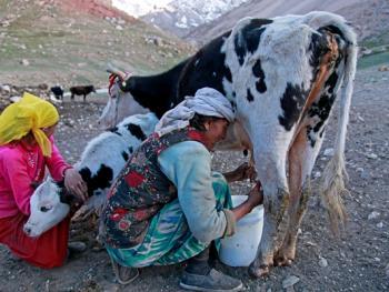 生活在红其拉甫的塔吉克人