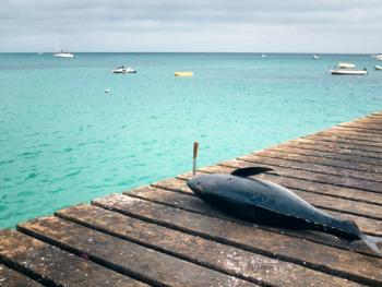 佛得角渔民的捕鱼生活14