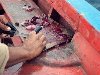 佛得角渔民的捕鱼生活05