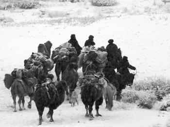 新疆北部哈萨克人冬季转场11