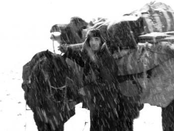 新疆北部哈萨克人冬季转场05