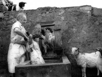 爱尔兰传统剪羊毛习俗10