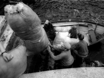 爱尔兰传统剪羊毛习俗11