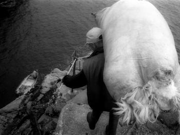 爱尔兰传统剪羊毛习俗12