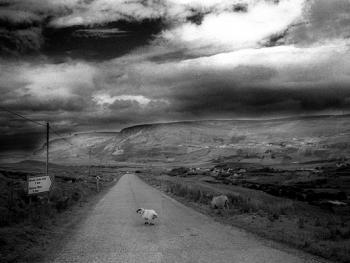 爱尔兰传统剪羊毛习俗