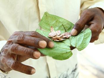 孟加拉人做槟榔包10