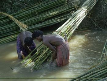 孟加拉放竹排05