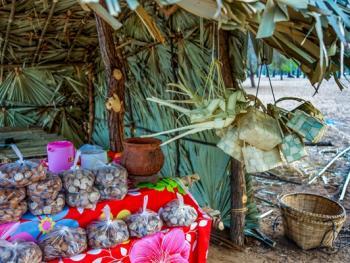 良乌棕榈糖的制作13