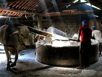 日惹的传统粉条厂