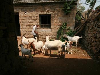 牧羊倌儿12