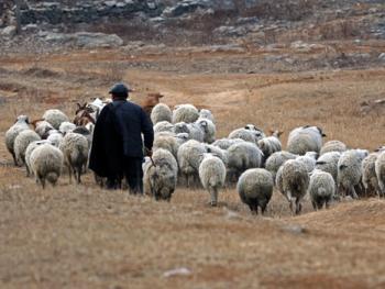 牧羊倌儿13