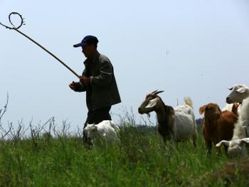 牧羊倌儿01