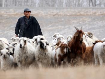 牧羊倌儿02