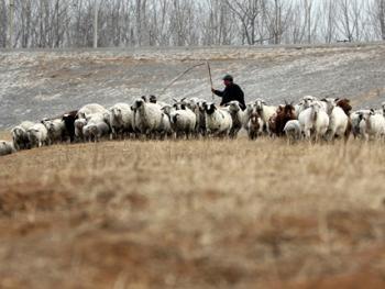 牧羊倌儿03