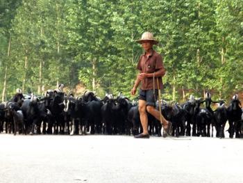 牧羊倌儿04
