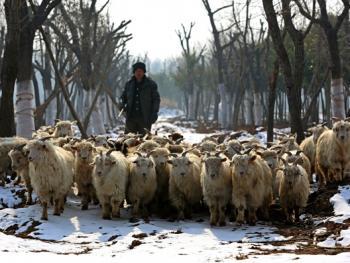 牧羊倌儿05