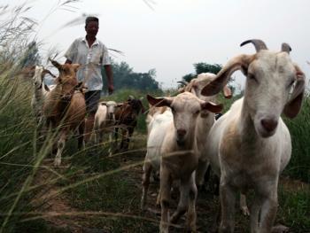 牧羊倌儿06