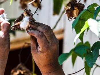 哥斯达黎加妇女的棉织手艺