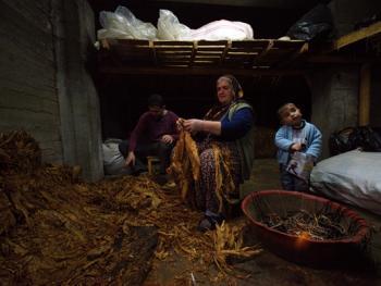 土耳其传统家庭烟草生产11