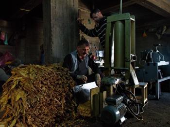 土耳其传统家庭烟草生产12