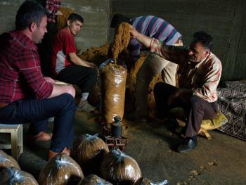 土耳其传统家庭烟草生产14