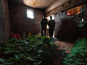 土耳其传统家庭烟草生产08