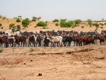 尼日尔干旱地区人畜用水方式01