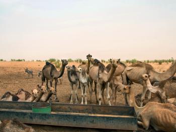 尼日尔干旱地区人畜用水方式02