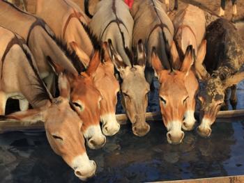尼日尔干旱地区人畜用水方式03