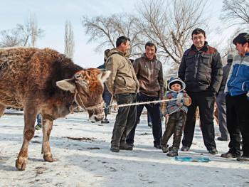 北疆乡村巴扎4
