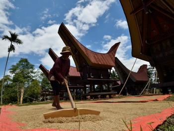 托拉雅人船型屋的建造10