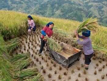 哈尼梯田的稻作农耕12