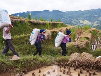 哈尼梯田的稻作农耕13