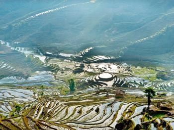 哈尼梯田的稻作农耕14