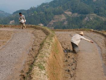 哈尼梯田的稻作农耕05