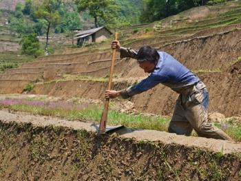 哈尼梯田的稻作农耕06
